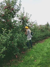 Fall, apple picking